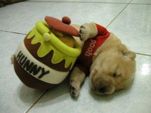 Pooh bear & 12 Adorable Animals in Halloween Costumes u2013 Jumbo Beat